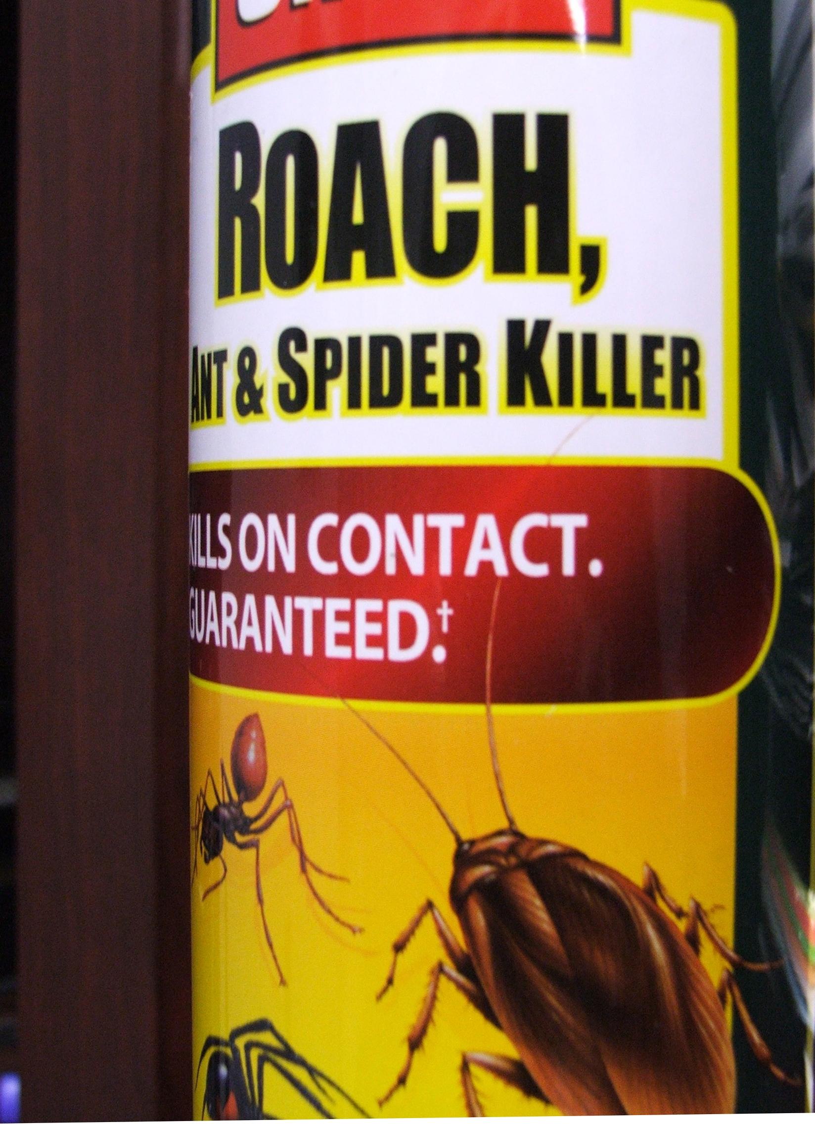 insectos   Más que Ciencia