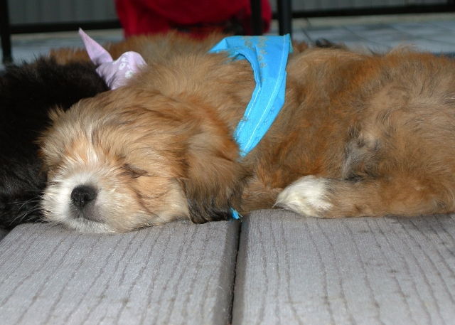sleep profundo