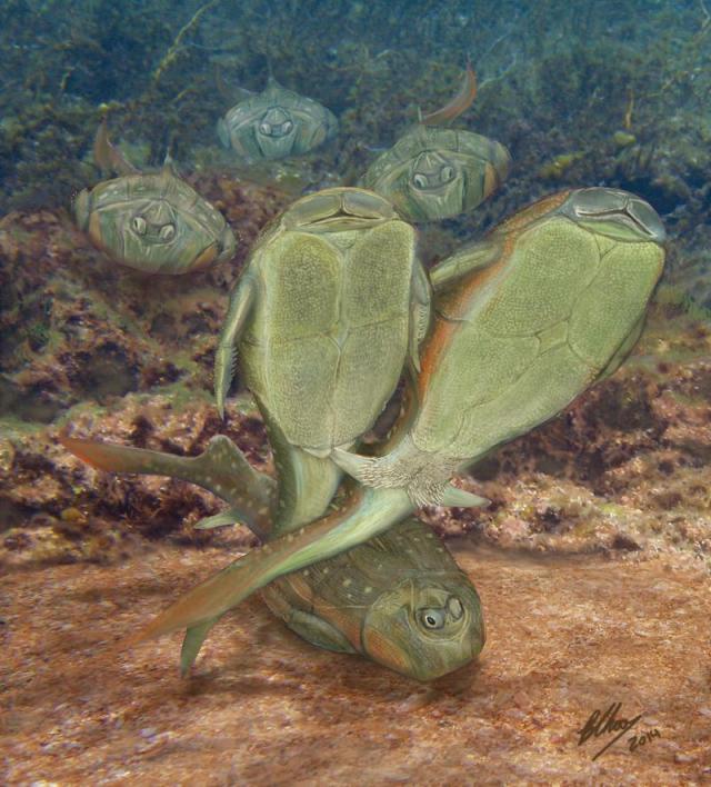 peces sexo